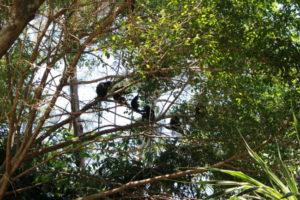 木の上にいる猿たち