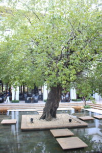 中庭の木と池
